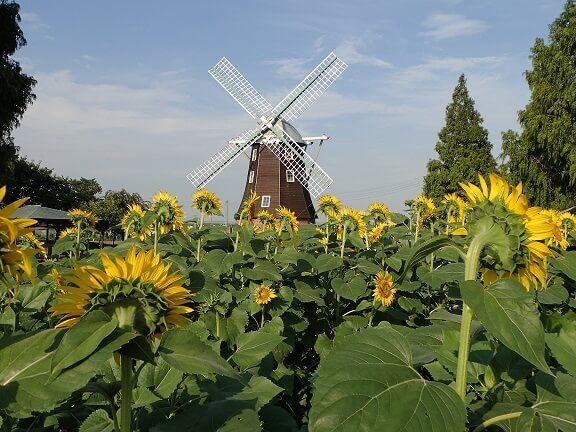 夏 あけぼの山農業公園
